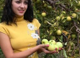 Zbierając jabłka (11)