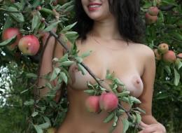 Zbierając jabłka (2)